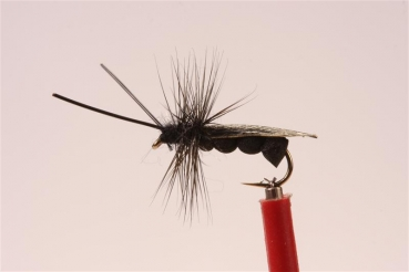 JD Black Sedge